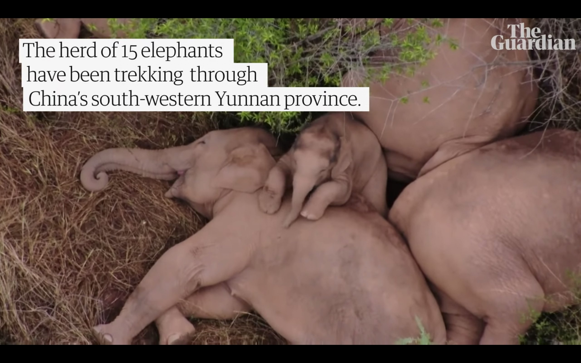 The 500km trekking elephant herd suddenly became a world star after just one night 4
