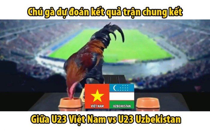 Vietnam vs Malaysia Tel: 'Prophet Chicken' shows off his talent in predicting match results 2