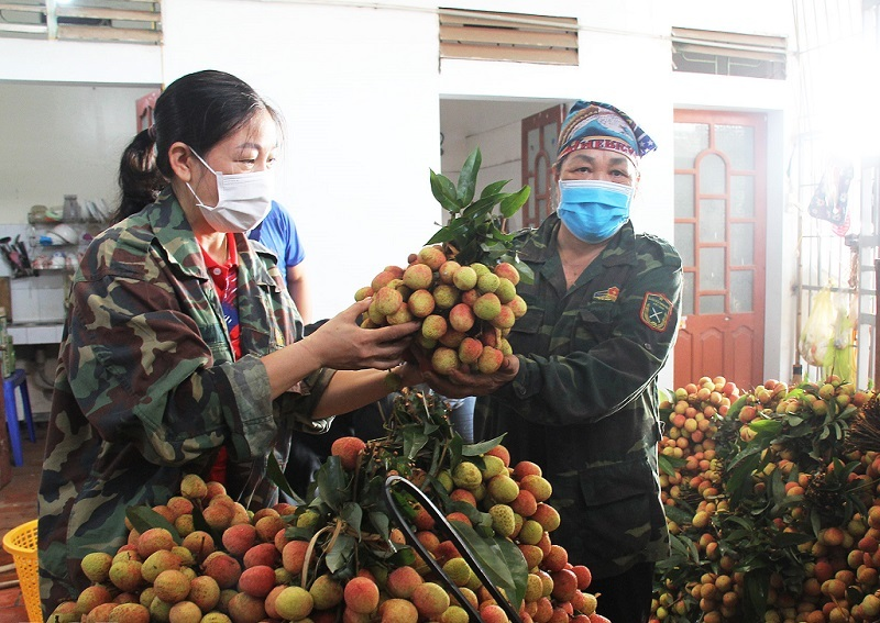 Bac Giang: There is no story that lychee will soon be forced down to 2,000 VND/kg 2