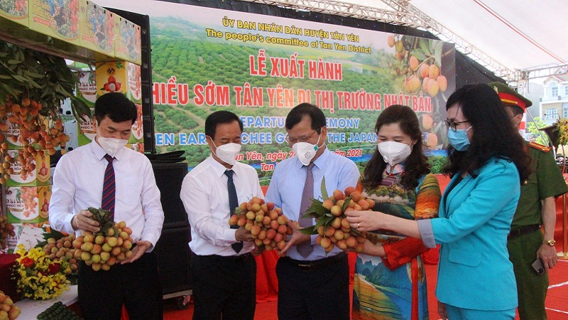 Bac Giang: There is no story that lychee will soon be forced down to 2,000 VND/kg 3