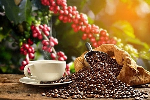 Coffee price today 12/10: The domestic market turns down 1
