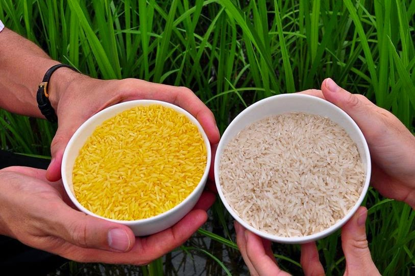 Rice prices today 9/10: Rice tends to move sideways 1